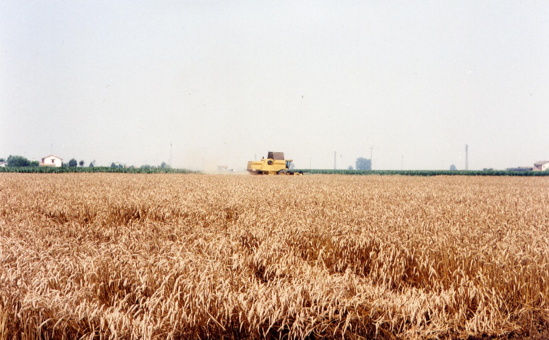 campagna grano